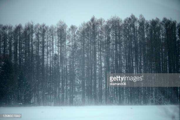 beautiful winter landscape snow cover the pine trees around niseko ski village area at niseko hokkaido 2020 - winter sports event stock pictures, royalty-free photos & images