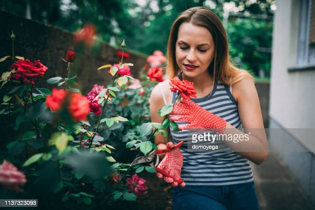beautiful woman cutting flowers in the backyard - red roses garden stock pictures, royalty-free photos & images
