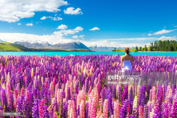 beautiful woman in white dress walking in field of flowers by a blue lake, colourful blossoming lupins in new zealand - purity stock pictures, royalty-free photos & images