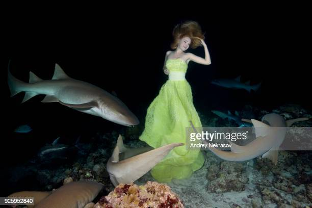 beautiful woman in yellow dress posing underwater with tawny nurse sharks (nebrius ferrugineus), night shooting, indian ocean, maldives - nurse shark stock photos and pictures
