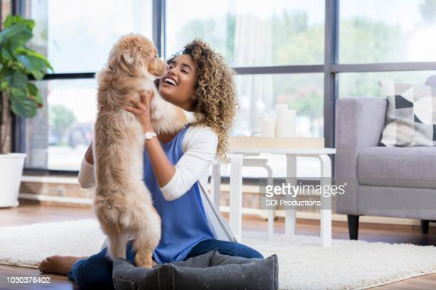 beautiful woman plays with adorable dog - pet bed stock pictures, royalty-free photos & images