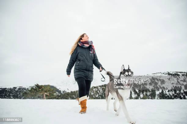 beautiful woman posing in the snow with siberian husky pet. - アラスカ文化 ストックフォトと画像