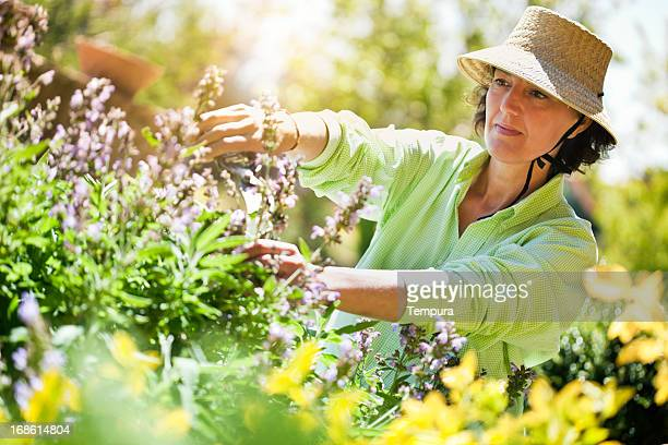 Beautiful woman pruning flowers in the garden