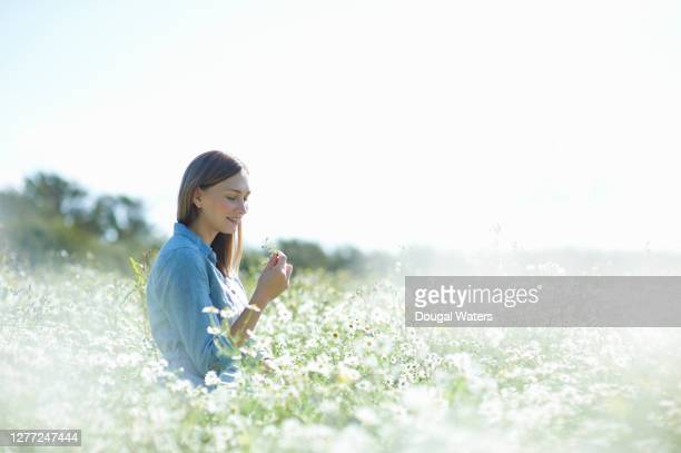 beautiful woman sitting amongst chamomile flowers in idyllic summer meadow. - agricultural field stock pictures, royalty-free photos & images
