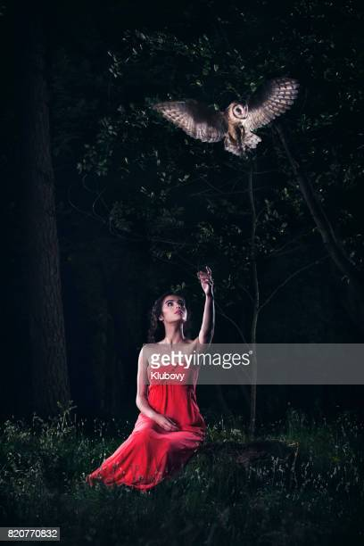 belle femme avec un hibou. - chouette blanche photos et images de collection