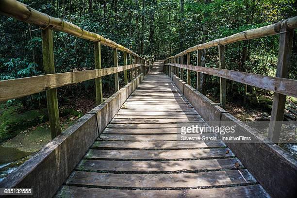 beautiful wood bridge in amazon rainforest - descrição geral - fotografias e filmes do acervo