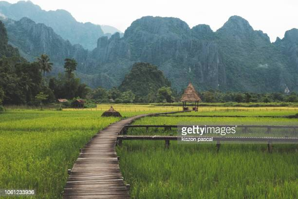 Beautiful wooden path surrounded by rice fields in Vang Vieng in Laos during morning .