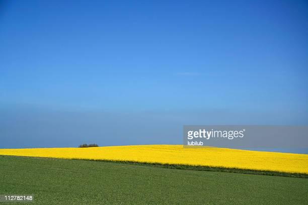Schöne gelbe canola-Feld und blauer Himmel im Frühjahr