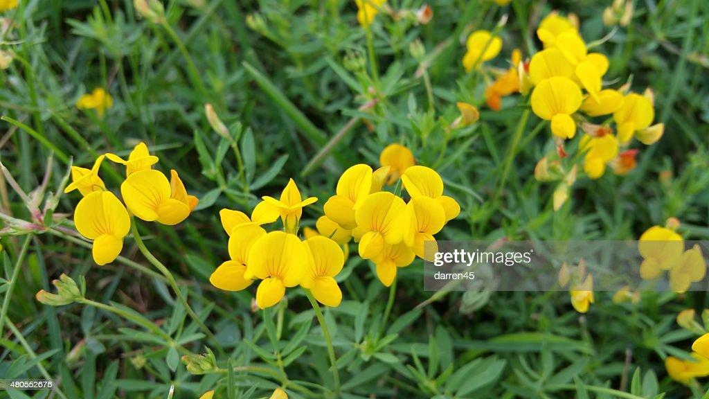 Bela Flor amarela : Foto de stock