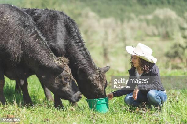 Beautiful young ethnic woman feeds her cattle on a warm summer day