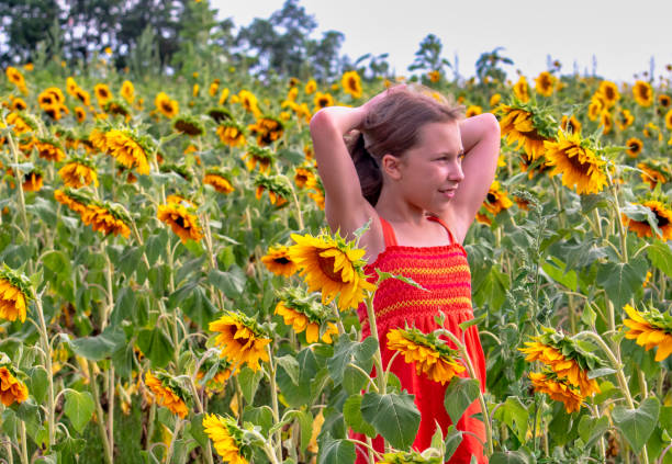 Beautiful Young Girl In A Field Of Golden Sunflowers