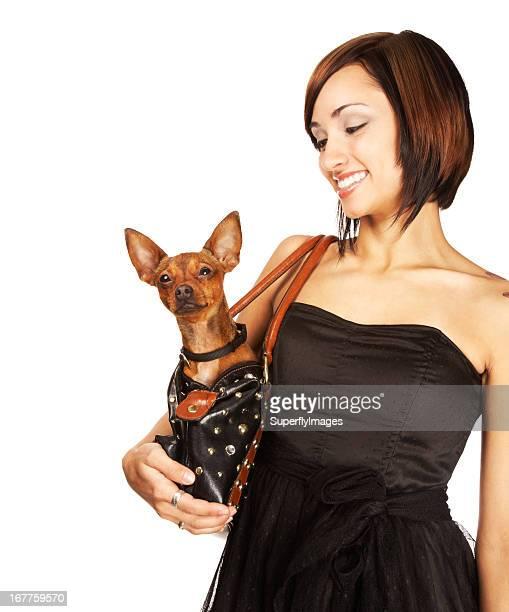 bela jovem sorridente no animal de estimação de chihuahua em sua bolsa de mão - cão fraldeiro - fotografias e filmes do acervo