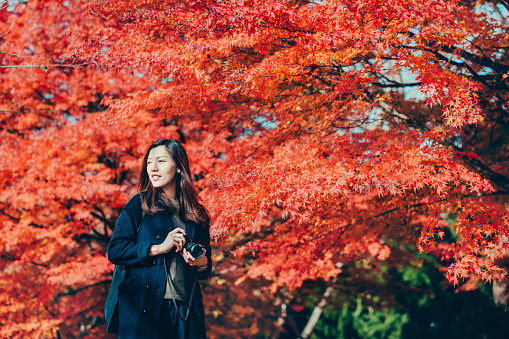 Beautiful young woman taking photos in park against red maple in Autumn - gettyimageskorea