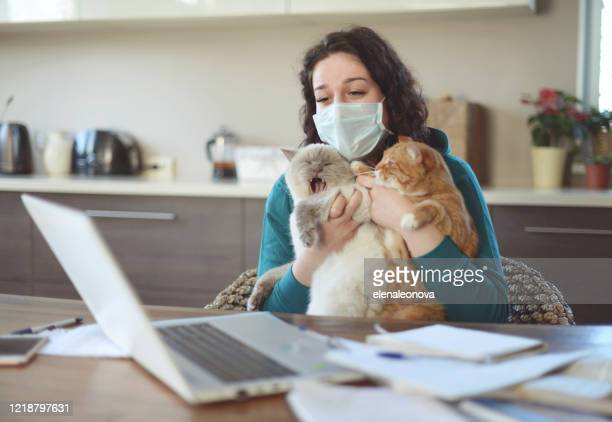 beautiful young woman working at home in the mask with cat - domestic animals stock pictures, royalty-free photos & images