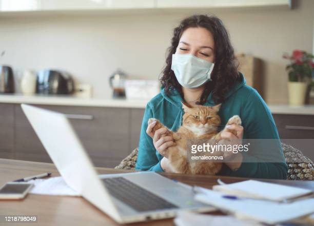 beautiful young woman working at home in the mask with cat - cat face mask stock pictures, royalty-free photos & images