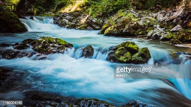 belle vue du canyon blejski vintgar - slovénie photos et images de collection
