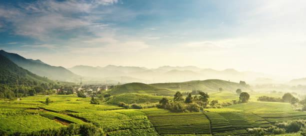 beautiful,longjing,tea garden,hangzhou, zhejiang, china - horizontal stock pictures, royalty-free photos & images