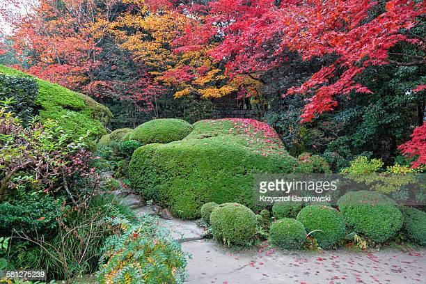 beautifully shaped azalea shrubbery - árvore de folha caduca - fotografias e filmes do acervo