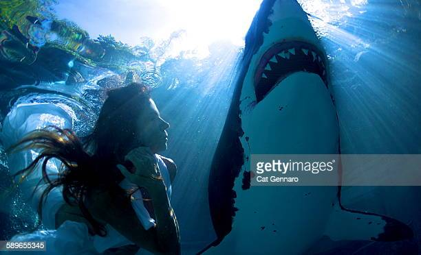 beauty beneath with great white shark - great white shark stock photos and pictures