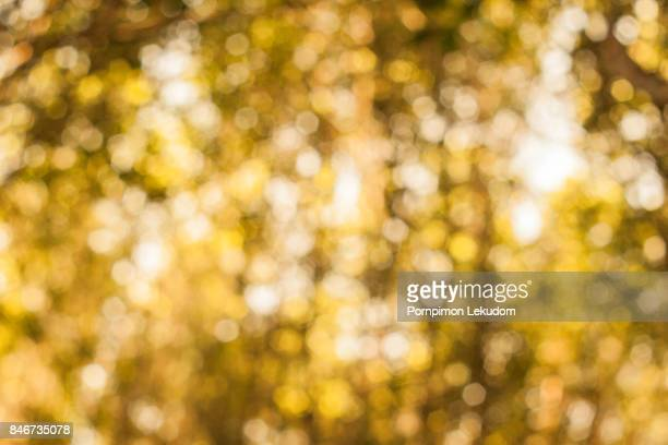 Beauty Bokeh, lens effect