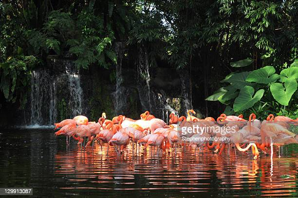 beauty creature - jurong bird park stock pictures, royalty-free photos & images