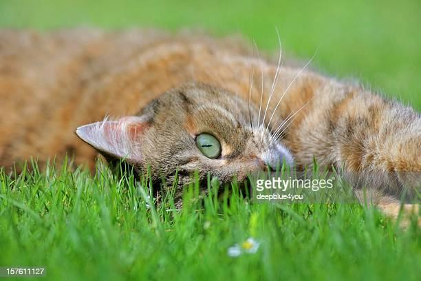 Un chat en papier peint de herbe