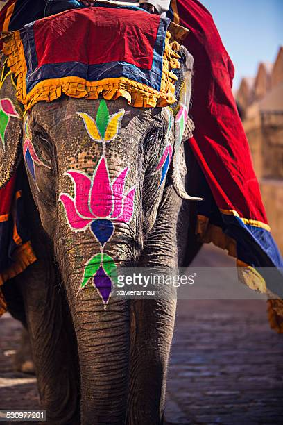 beauty elephant - indian elephant stock pictures, royalty-free photos & images