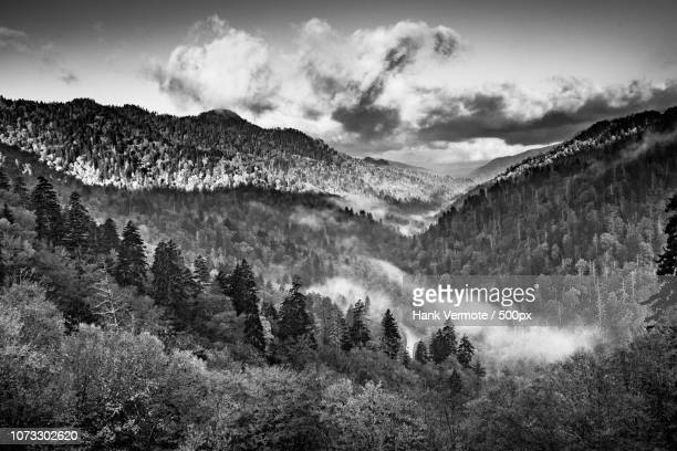 beauty in smokies black and white - hank vermote stock pictures, royalty-free photos & images