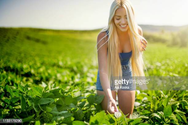 beauty in soybean field. - soybean harvest stock pictures, royalty-free photos & images