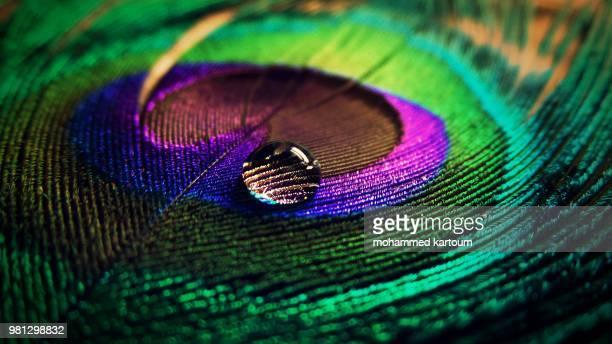 beauty of a drop - paon photos et images de collection
