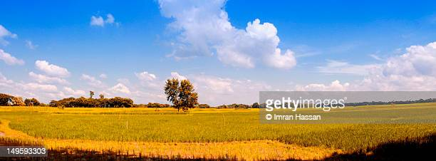 beauty of bangladesh - khulna stock photos and pictures