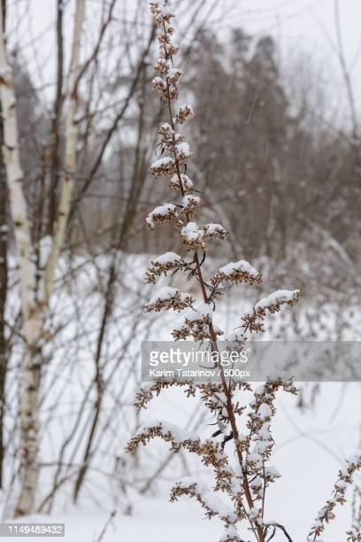 beauty of nature in winter - karim bonnet photos et images de collection