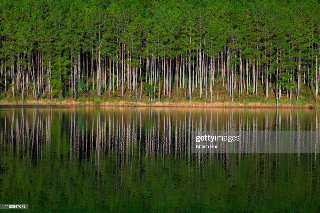beauty pine forest island reflection on the lake with green of the tree and dramatic sky at sunrise : Stock Photo