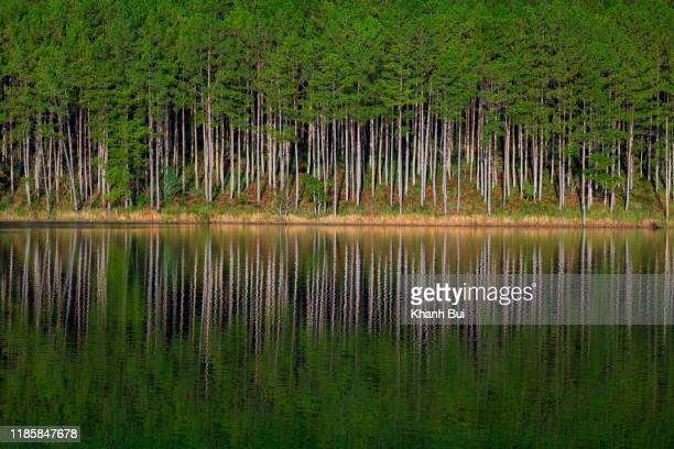 beauty pine forest island reflection on the lake with green of the tree and dramatic sky at sunrise - reflection lake stock photos and pictures