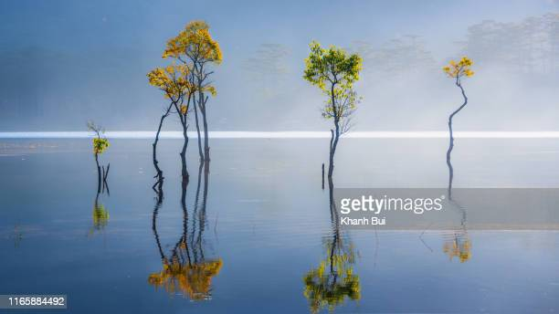beauty submerged tree on the fog lake at sunrise, the best of nature with abstract and magic light - bloesem stockfoto's en -beelden