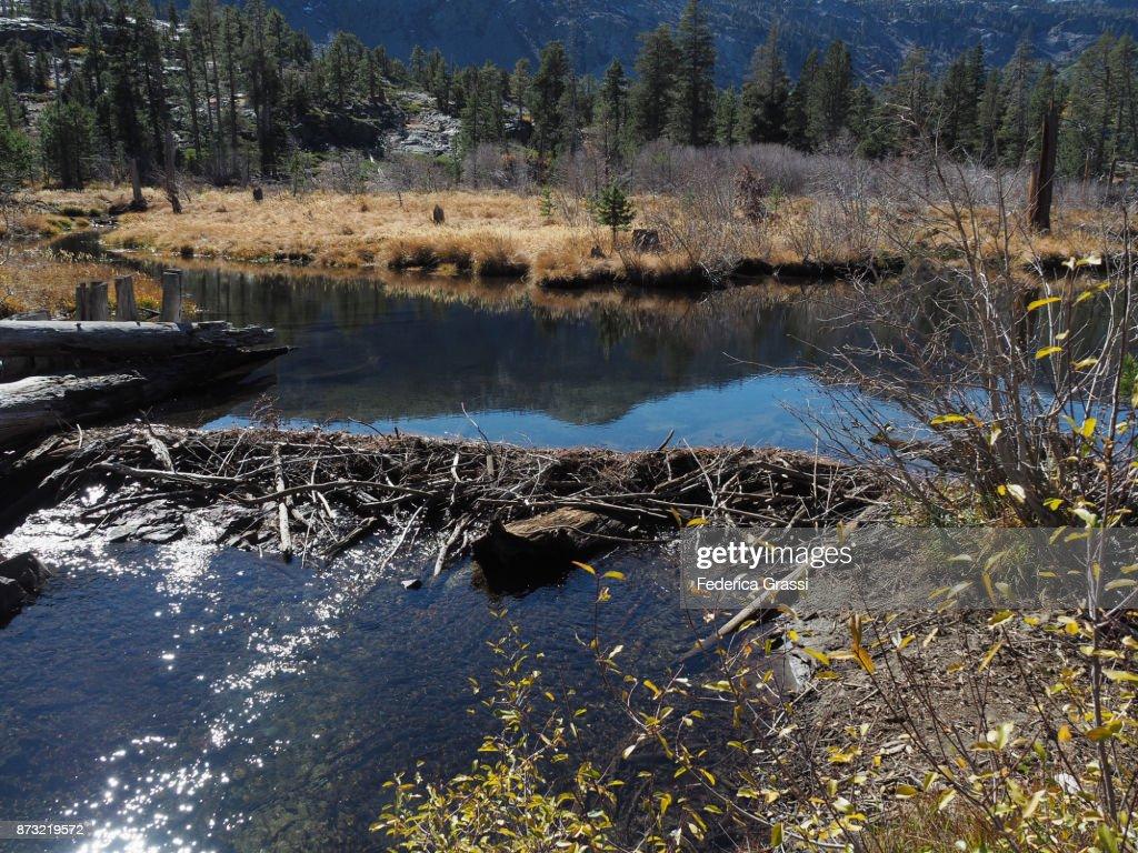 Beaver Dam Along Glen Alpine Creek California Stock Photo - Getty Images