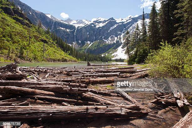 beaver dam in mountain pond, glacier national park, montana, usa - beaver dam stock pictures, royalty-free photos & images
