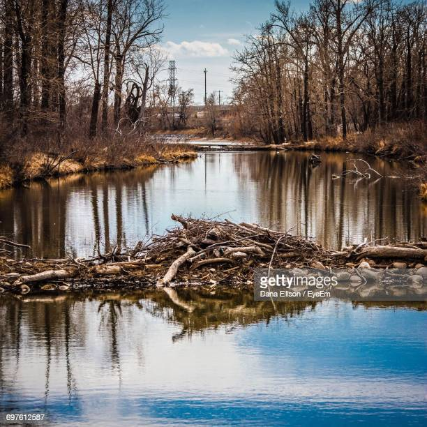 beaver dam in river - beaver dam stock pictures, royalty-free photos & images