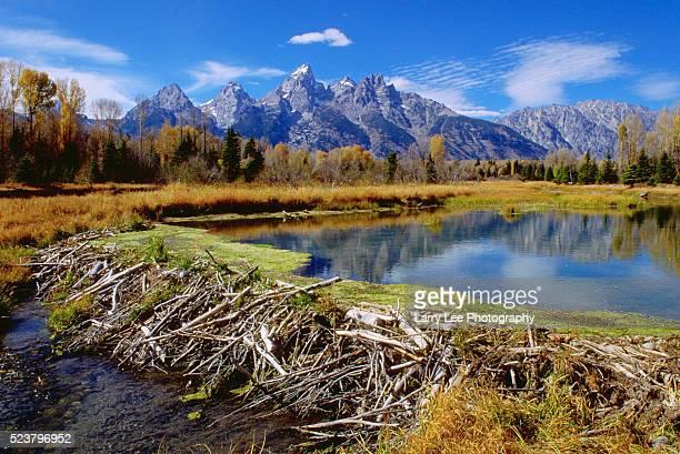 beaver dam in the teton mountain range - beaver dam stock pictures, royalty-free photos & images