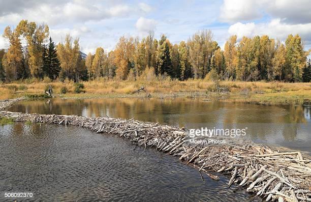 beaver dam upper schwabacher landing - beaver dam stock pictures, royalty-free photos & images