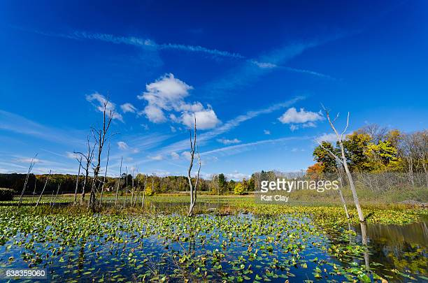 beaver marsh in cuyahoga valley national park - cuyahoga river stock photos and pictures