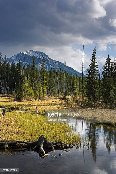 beaver pond and mount baldy, kananaskis country, alberta, canada - mount baldy stock photos and pictures