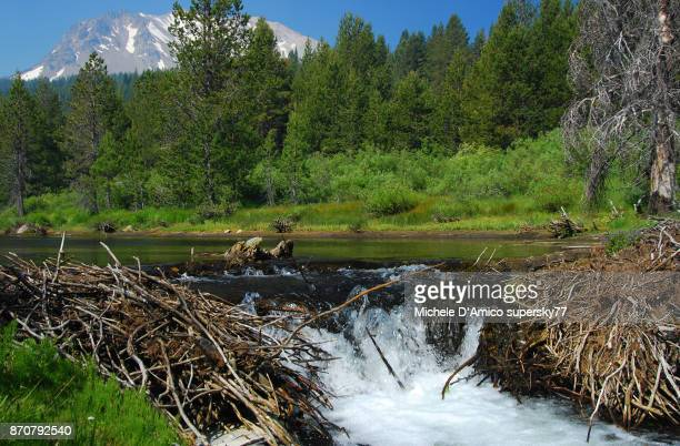 beaver pond with waterfall - beaver dam stock pictures, royalty-free photos & images