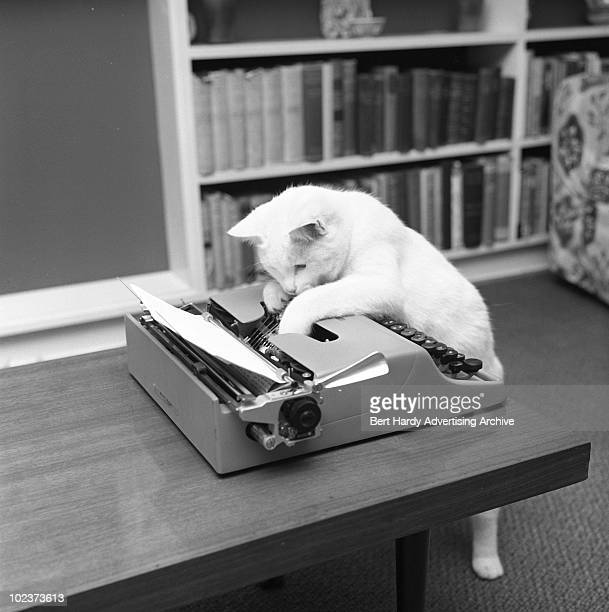 Bebel the cat hard at work at a typewriter 31st OCtober 1964