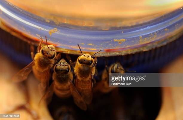 Because of its antiinflammatory properties venom from honeybees can be used to help sufferers of rheumatoid arthritis