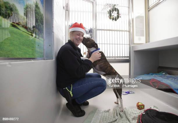 Becky Fisher rehoming and welfare manager at Battersea Dogs amp Cats Home in London with Queen a female sevenyearold Staffordshire bull terrier