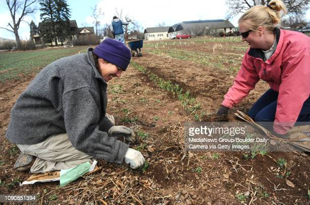Becky Joyce left and Emily Knapp weed and clean up the rows of iris plants at Long's Gardens on Tuesday afternoon The popular garden which sells its...