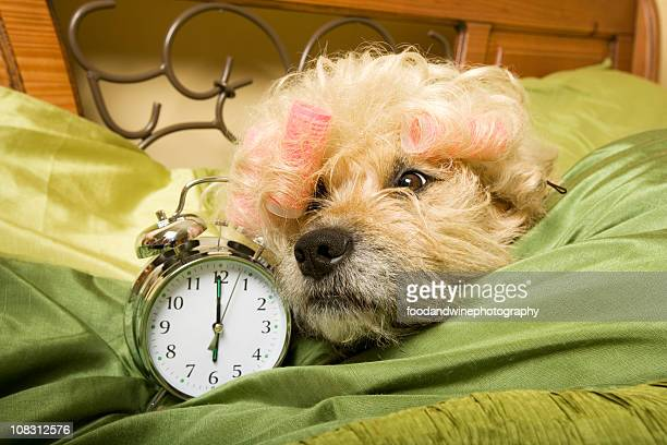 bed head - funny wake up stock pictures, royalty-free photos & images