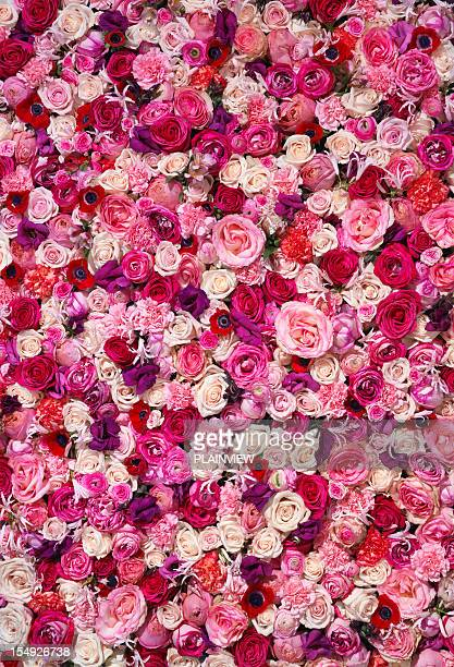 bed of flowers - red roses stock pictures, royalty-free photos & images