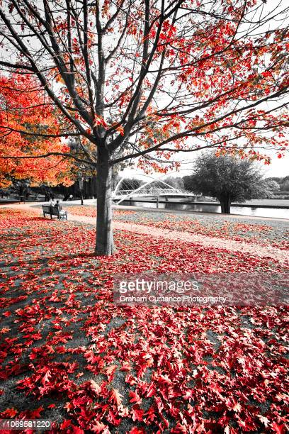 bedford in autumn - ouse river stock photos and pictures